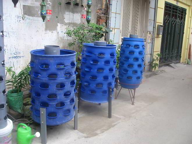 Thùng phi nhựa cũ được sử dụng để trồng rau sạch