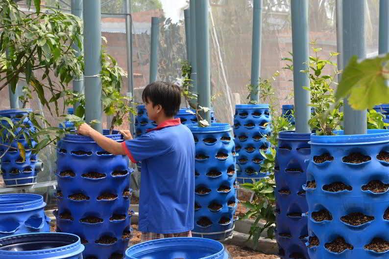 Ứng dụng thùng phuy nhựa cũ vào việc trồng rau